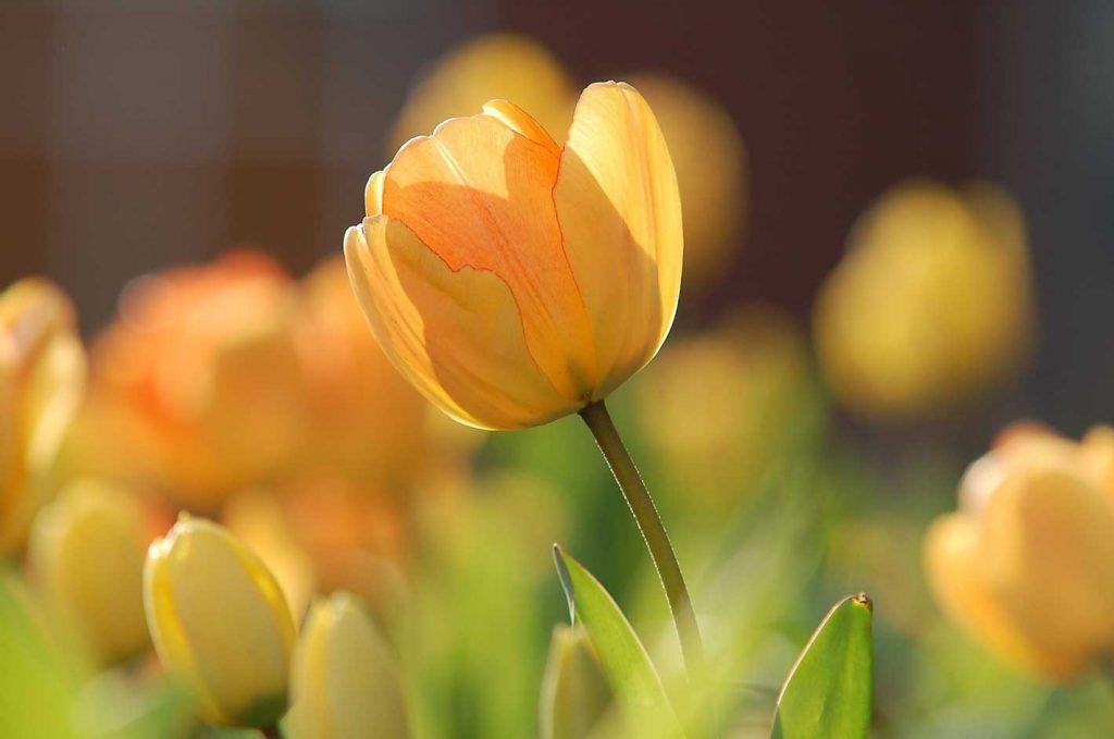 printemps en famille airnounou